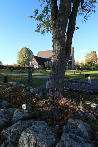Medieval stone church and cemetery behind tree trunk in autumn sunlight