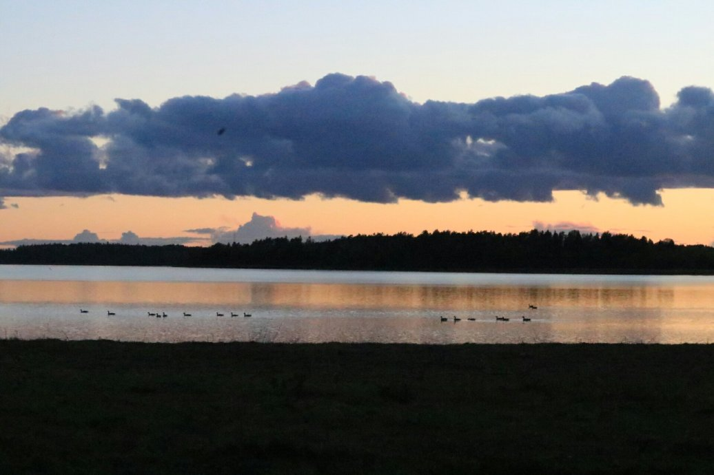 Geese in autumn lake at sunset, photograph 4/4