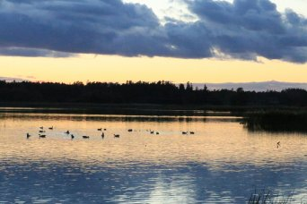Geese in autumn lake at sunset, photograph 2/4